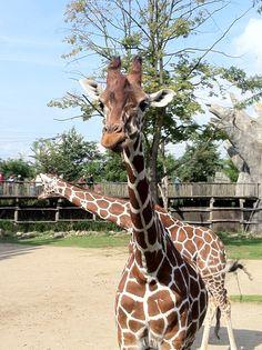 Dierentuin/Zoo Blijdorp Rotterdam