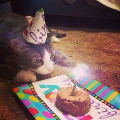 What, what? Cat birthday! #birthday #cute #cat