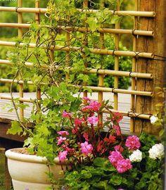 Hoy queremos acercaros un sencillo tutorial paso a paso para que sepáis cómo hacer un enrejado de bambú. Si tienes alguna planta trepadora en tu jardín o tienes planeado instalar alguna esta sencilla celosía, que puedes hacer fácilmente con tus propias manos, te ayudará a darle un nuevo aire a tu jardín. Igualmente puedes usarla en un balcón, terraza o patio y fijarla a un poste o incluso a la pared, las posibilidades son infinitas.  Además otra ventaja es que una vez aprendas la técnica…