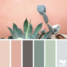 today's inspiration image for { cacti color } is by @mijn.grid ... thank you, Sisilia, for another fresh + inspiring #SeedsColor image share!