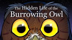 The Hidden Life of the Burrowing Owl, Produced at Titmouse, Inc., 2008.