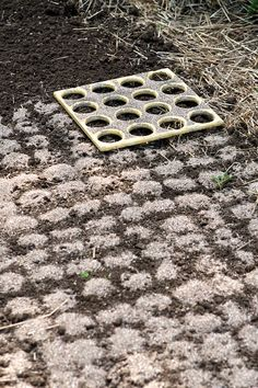 Tips for Growing Great Carrots Use a template, 3-4 seeds in each opening, cover w/sand or vermiculate, or very light soil. Put a piece of burlap over the seed area to hold moisture in soil