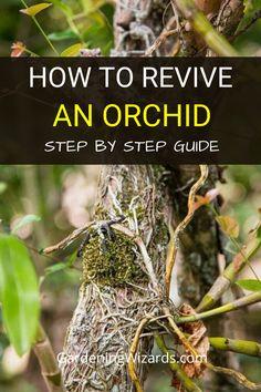 Indoor Orchids, Orchids Garden, Garden Plants, House Plants, Orchid Roots, Orchid Leaves, Orchid Plant Care, Orchid Plants, Orchid Terrarium
