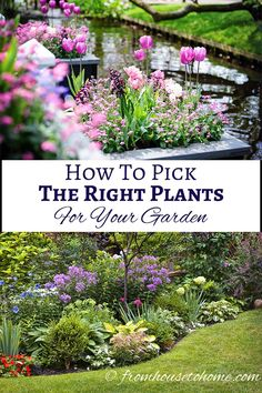 How to pick the right plants for your garden (images by By Grecaud Paul and Elenathewise / Adobe Stock) | If you are looking for some garden design ideas, this guide will help you to pick the right plants, which makes growing your garden so much easier!