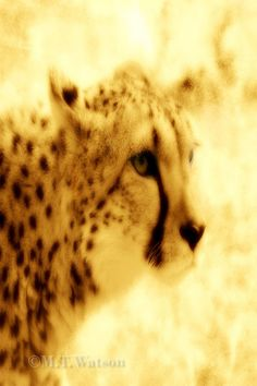 Cheetah Print #3, Big Cat, Nature Wildlife, New Matted Surreal Giclee Art, 4x6 Sepia Feline Print in 5x7 Mat, FREE SHIPPING $15.00 by OakwoodView