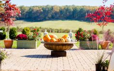 Way up High on the Apple Tree… Small Things, Things To Do, Autumn 2017, Outdoor Furniture Sets, Outdoor Decor, Apple Tree, Stuff To Do, Party, Vintage