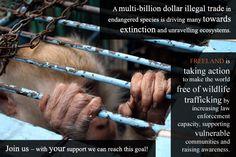 Stop Wildlife Trafficking!