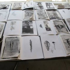 field and hedgerow: Exhibiting
