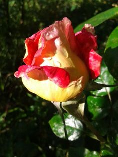 Globallshare | Make the Most of World World, Rose, Flowers, Plants, How To Make, Pink, The World, Plant, Roses