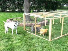construire+un+enclos+pour+poules+facilement+pas+cher