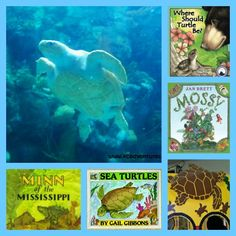 {9 Wonderful Books about Turtles} Enjoy some fun reads and nonfiction books that teach kids about freshwater and salt water turtles