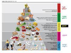 영양 피라미드 - Google 검색