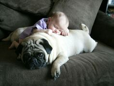 dogs and babies make the best pair