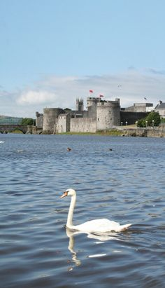 King John's Castle is a 13th century Castle on 'King's Island' in the heart of medieval Limerick City!