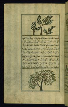 These illustrations depict a frankincense tree (lubān) and an almond tree.  Wonders of Creation  by Qazwīnī 1293 was translated to Turkish in 1717  completed by Rūzmah-ʾi Nāthānī - W659