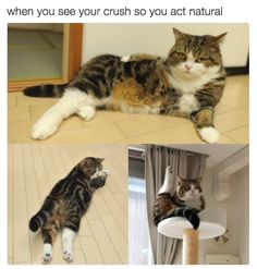 These really believable poses: | 18 Cat Memes Literally Everyone Will Relate To