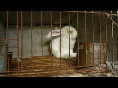 Urge Global Retailer TJX to Stop Selling Angora and Fur. SCROLL DOWN PETA PAGE TO SIGN. PLEASE SHARE. THANK YOU.