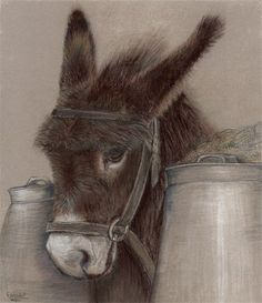 Burro drawing by Sue Goodall Animal Paintings, Animal Drawings, Pencil Drawings, Art Drawings, Horse Drawings, Colored Pencil Artwork, Color Pencil Art, Colored Pencils, Zebras
