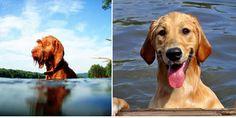 Best of the Best: Reader Dog Photos