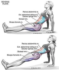 One Exercise Proven To Burn Back Fat, Tighten Your Core And Improve Posture - Infographix Directory | Infographics Directory | Scoop.it