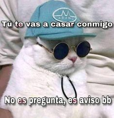 #cats #catlover Cute Love Memes, Funny Love, Memes Amor, Romantic Memes, Funny Images, Funny Pictures, Memes Lindos, Ex Amor, Frases Tumblr
