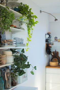 Urban Jungle Bloggers: Kitchen Greens by Papierowy wymiar