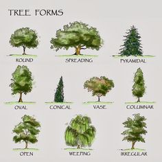 Architecture Drawing Of Trees tree symbol in plan- drawing | symbols, landscaping and plan drawing