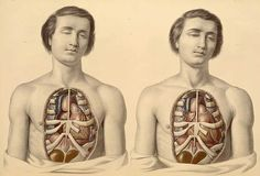 Francis Sibson, anatomist, and William Fairland, artist, 19th C by astropop, via Flickr