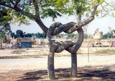 Il a passé 40 ans de sa vie à transformer des arbres en véritables oeuvres d'art, et le résultat est vraiment bluffant ! Du jamais vu...
