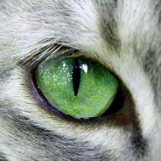 Photo prise par Claudine FerriniLe champ de vision total d'un chat est supérieur à 200°, contre seulement 180° chez l'homme.Trouvez la meilleure assurance pour votre animal de compagnie grâce à ce comparateur en ligneDécouvrez d'autres images de Claudine Ferrini