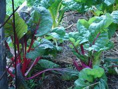 Down to Earth: Organic fertilisers (fertilizers)