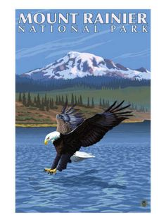 National park poster - Eagle fishing, Mt. Rainier, Washington