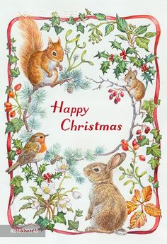 PortForLio - Red squirrel, mouse, rabbit, robin, holly, ivy etc