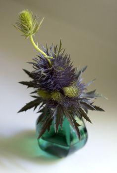 thistle. floral arrangement