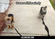 It Was A Little Windy#funny #lol #lolzonline