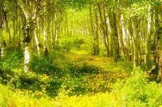 Обои природа, лес, весна, цветы, трава, деревья картинки на рабочий стол, скачать бесплатно.