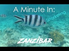 A Minute In Zanzibar - Tanzania Travel Videos, Tanzania, Resorts, Hotels, Youtube, Movie Posters, Film Poster, Vacation Resorts, Popcorn Posters