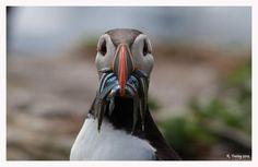 Hungry bird by Regina F on 500px