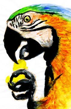 Head of a parrot, yellow ara.