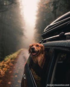 Road trip companions