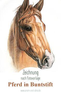 Zeichnung Pferd, Fuchs, reiten, Zaumzeug, mit Buntstift nach Foto, von Aram und Abra. Kunst, Illustration, Blog