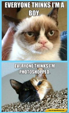 Grumpy cat and multicolored cat are sad :( :D #cats #grumpycat