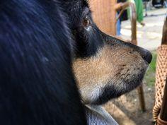 5 Monate mit Hund: Sitz. Platz. Fuss. Wer erzieht hier wen?