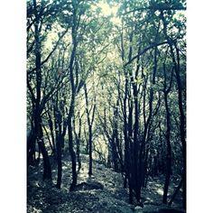 Valió la pena equivocarse de camino. #laMola #naturaleza #arboles #camino #Barcelona
