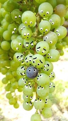 ༺ Beautiful ~ Inside and Out ༻ Funny Photos, Funny Images, Funny Fruit, Miniature Photography, Emoji Images, Funny Phone Wallpaper, Strip, Funny Illustration, Fruit Art