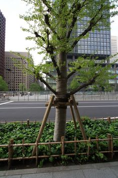 The Japanese approach to nature is awe inspiring particularly in the way that they manage and prune trees. It allows for the creation of visual imagery that is unsurpassed in designed western lands… Tree Stakes, Western Landscape, Japan Travel, West Coast, Bonsai, Tokyo, Trees, Japanese, Garden