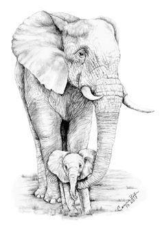 """Baby of Mine"" graphite drawing I did of one of my favorite animals in the animal kingdom. by connie baten"