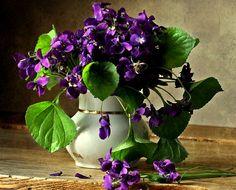 01-20-2016 wild purple violets...in white ceramic vase.
