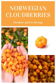 The cloudberry is a hard-to-find yet popular berry in northern Norway. All about Norwegian cloudberries. Scandinavian Food, Dog Food Recipes, Norway, Berries, Blackberry
