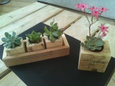 petite décoration avec des plantes  et du bois de palette!